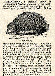 hedgehog clip art, vintage digital, black and white graphics, animal clipart, encyclopedia clipping