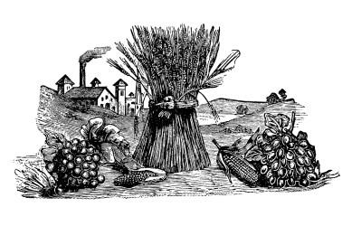 wheat harvest clipart fruit vegetables clip fall sheaf garden graphics display autumn fruits vegetable farm olddesignshop artwork illustration printable antique