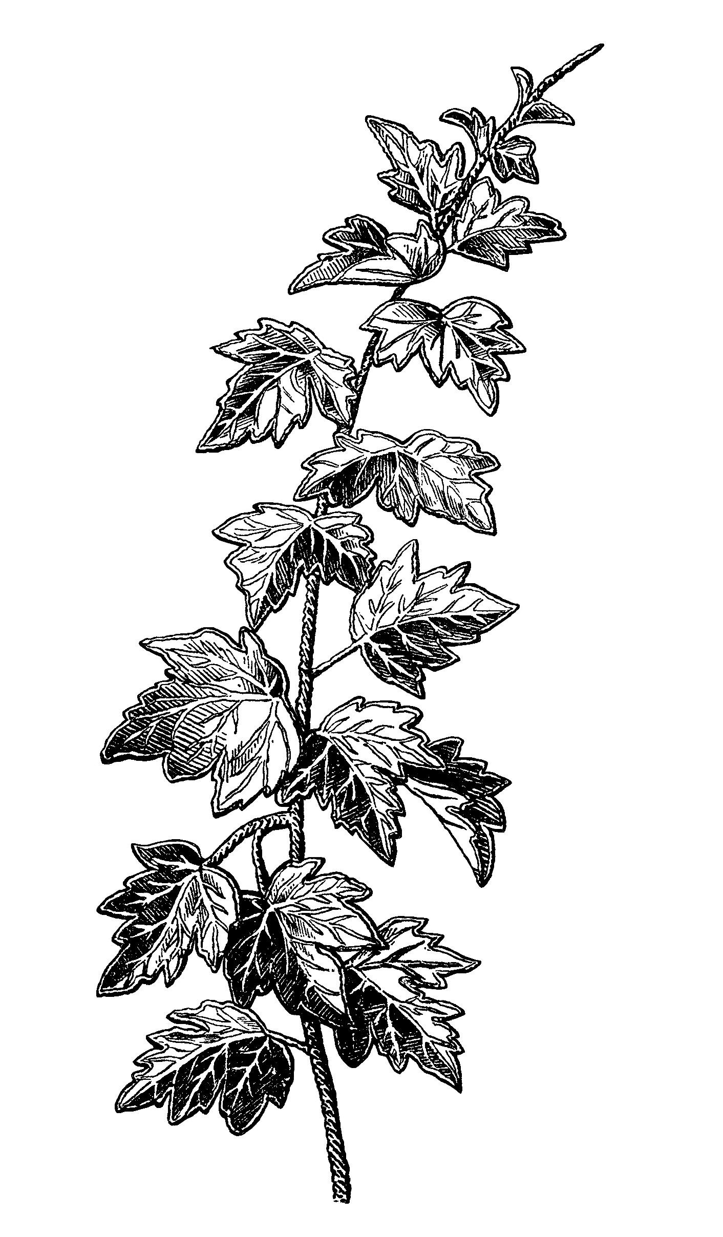 Autumn Leaf Design Vintage Image