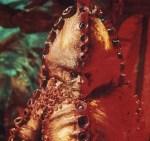 Terror Of The Zygons - 1975 - S13 - E1/6