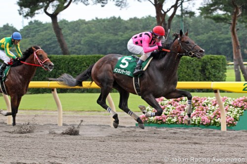 Leopard Stakes
