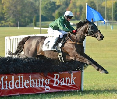 Sara E. Collette's Wahoo (Darren Nagle) won the maiden hurdle race for horses owned and trained in Virginia. (Douglas Lees photo)
