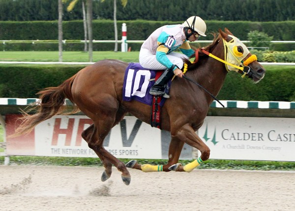 FLUTTERBY The Cut The Charm Stakes 11-16-13 CRC Finish