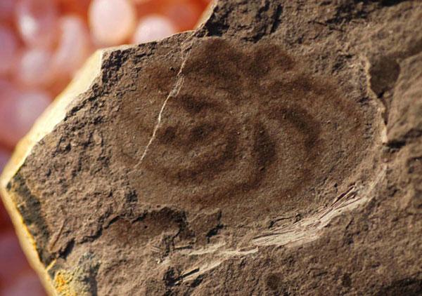 fsm-de-550-millones-de-anos