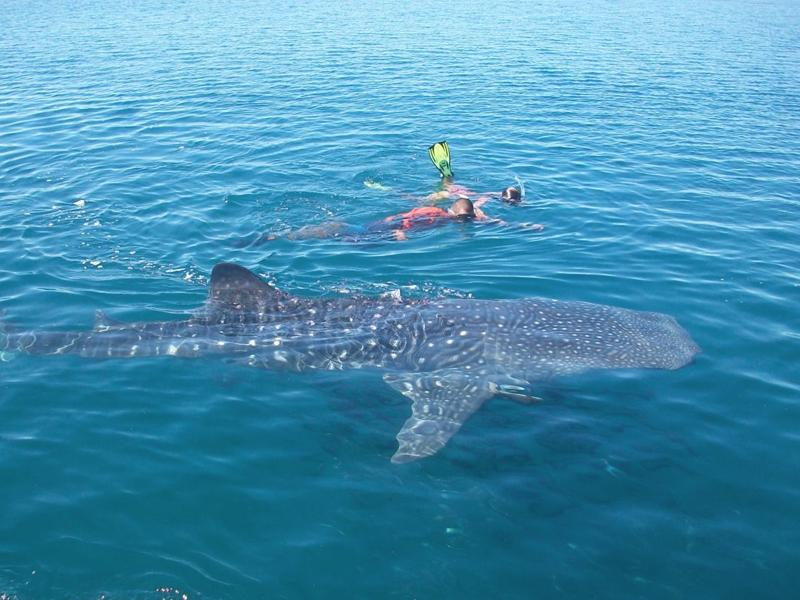 Swimming with Whale Sharks and Sea Lions in La Paz