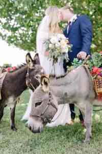 beer-burros-texas-hill-country-wedding-old-glory-ranch-wimberley