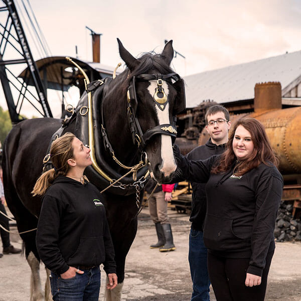Experience days with shire horses