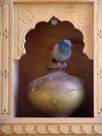 Pot_n_Pigeon