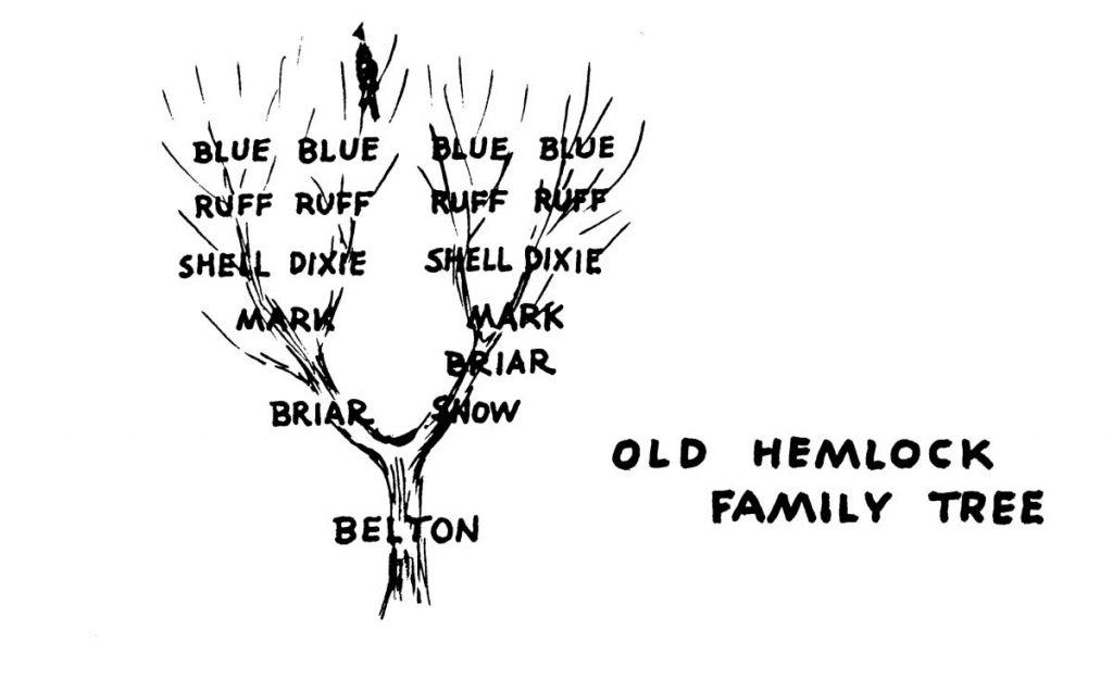 Old Hemlock