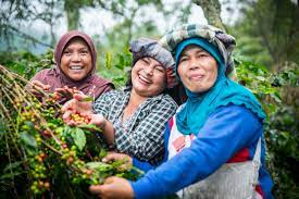 endenoza 2021 Shere Khan - INDONESIA ( ORGANİK)