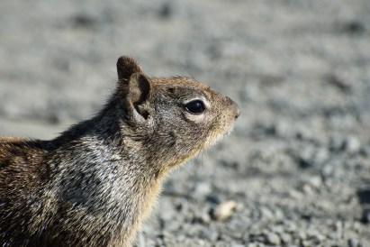 Confident squirrel