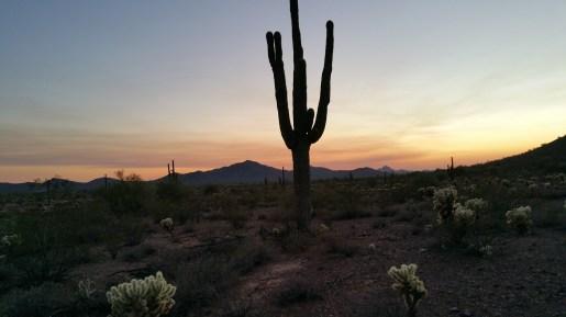 Desert Hiking Saguaro in Arizona