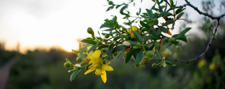 cropped-apache-trail-desert-flower.jpg