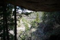 Walnut Canyon Pine3