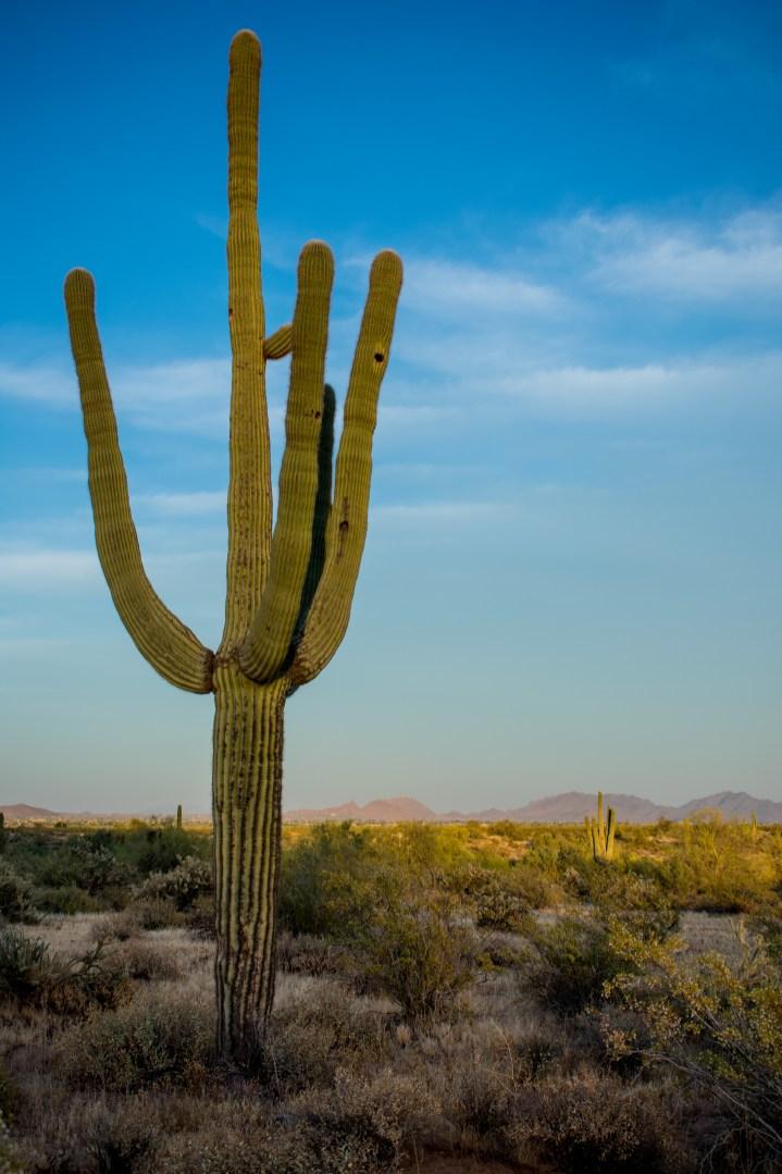 Hiking Arizona Trail Desert Phoenix Saguaro Cactus