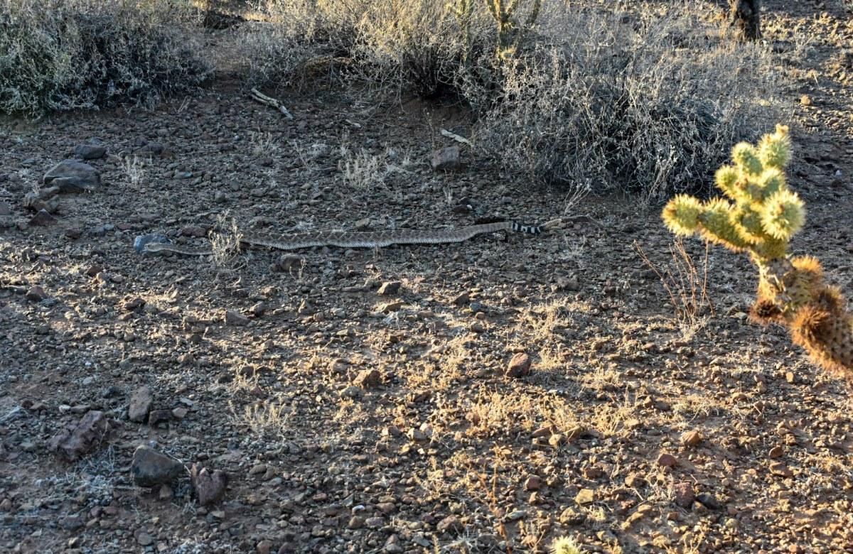 Hiking Arizona Rattlesnake Rusty Ward