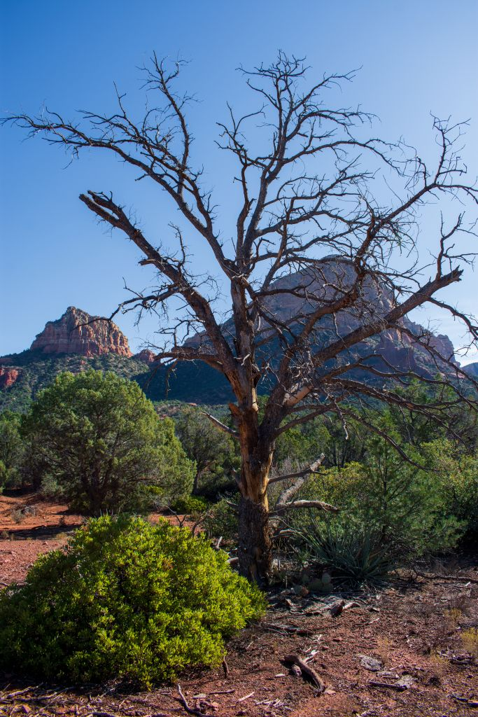 Sedona Arizona Little Horse Trail