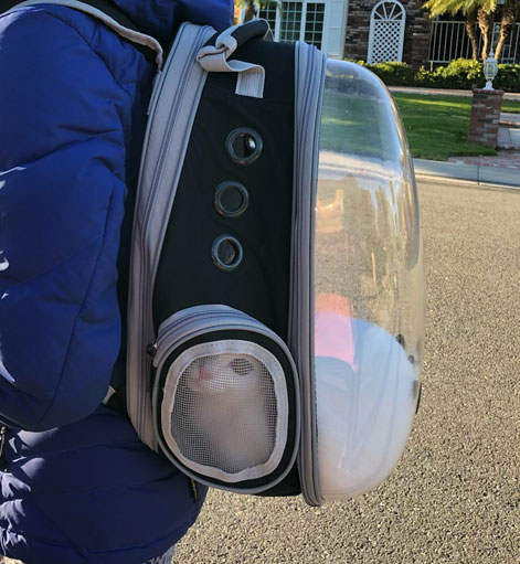 Walking with the Lollimeow pet carrier cat backpack