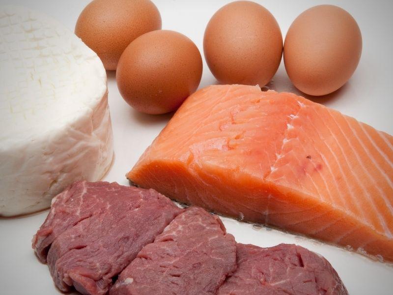 digest protein