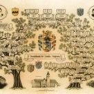 rodoslovnoe drevo