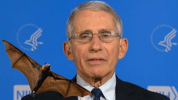 Did Dr. Fauci promote risky research at Wuhan Lab