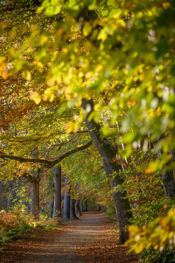 Lady Mary's Autumn, Crieff