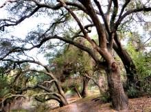 Sleepy Hollow trail, Trabuco Canyon, California, old stone homes, California homesteaders