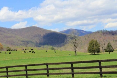 Farmland Madison Virginia, old stone foundation, old stone ruins, farmland for sale, Rapidan Wildlife Management Area
