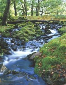 Irish Woodland Stream