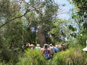 Carib Conn - The Baobab Tree