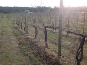 exploring-va-wine-1-17
