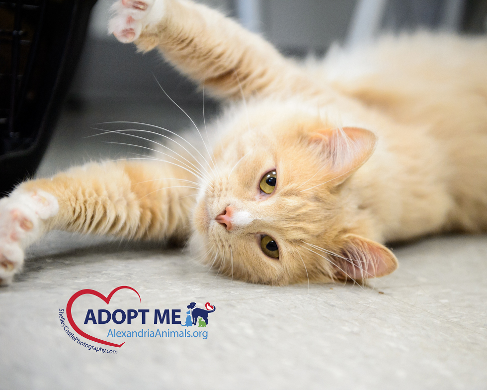 February Pets of the Month