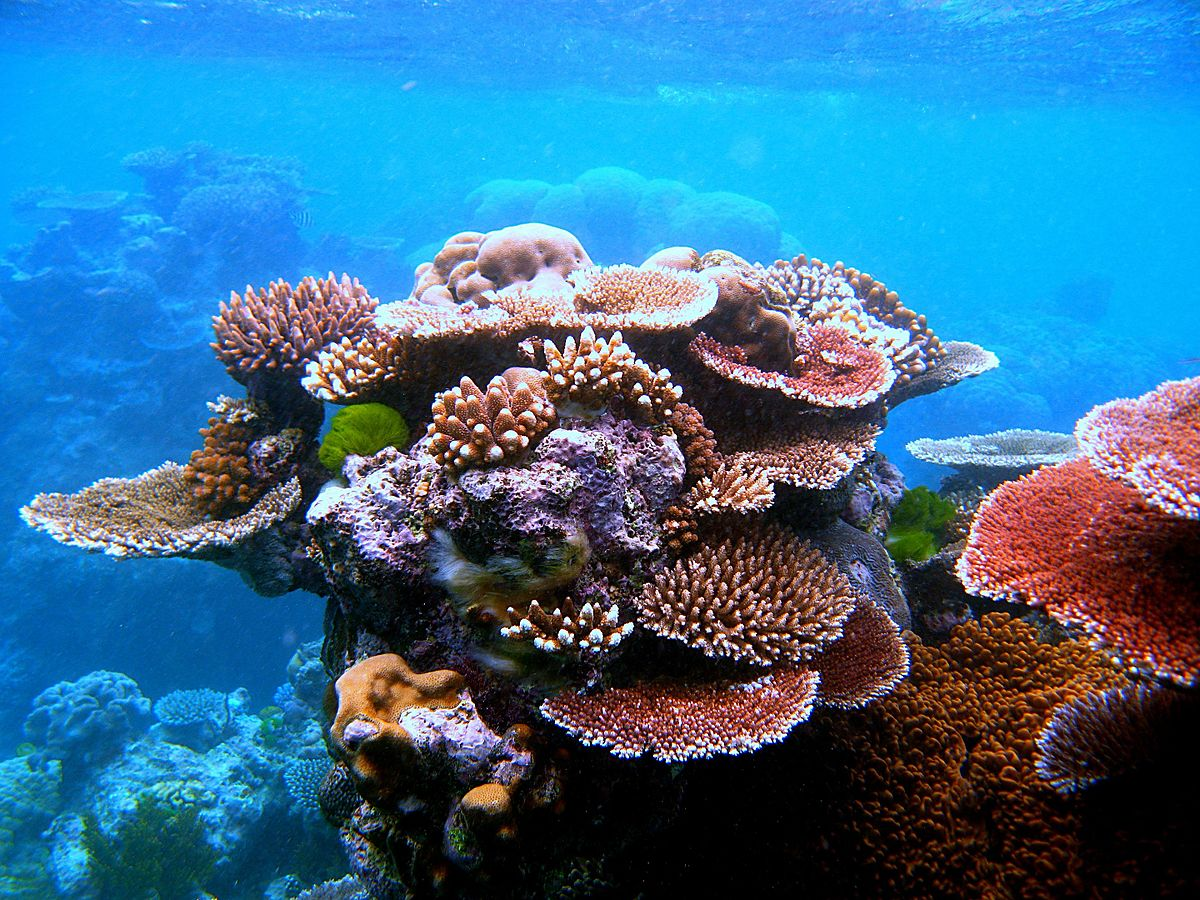 Citizens and Governments Working Together to Save Caribbean Reefs