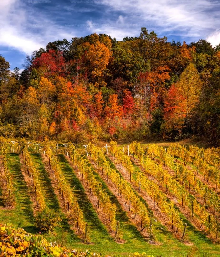 Fall Into Virginia Wine Month