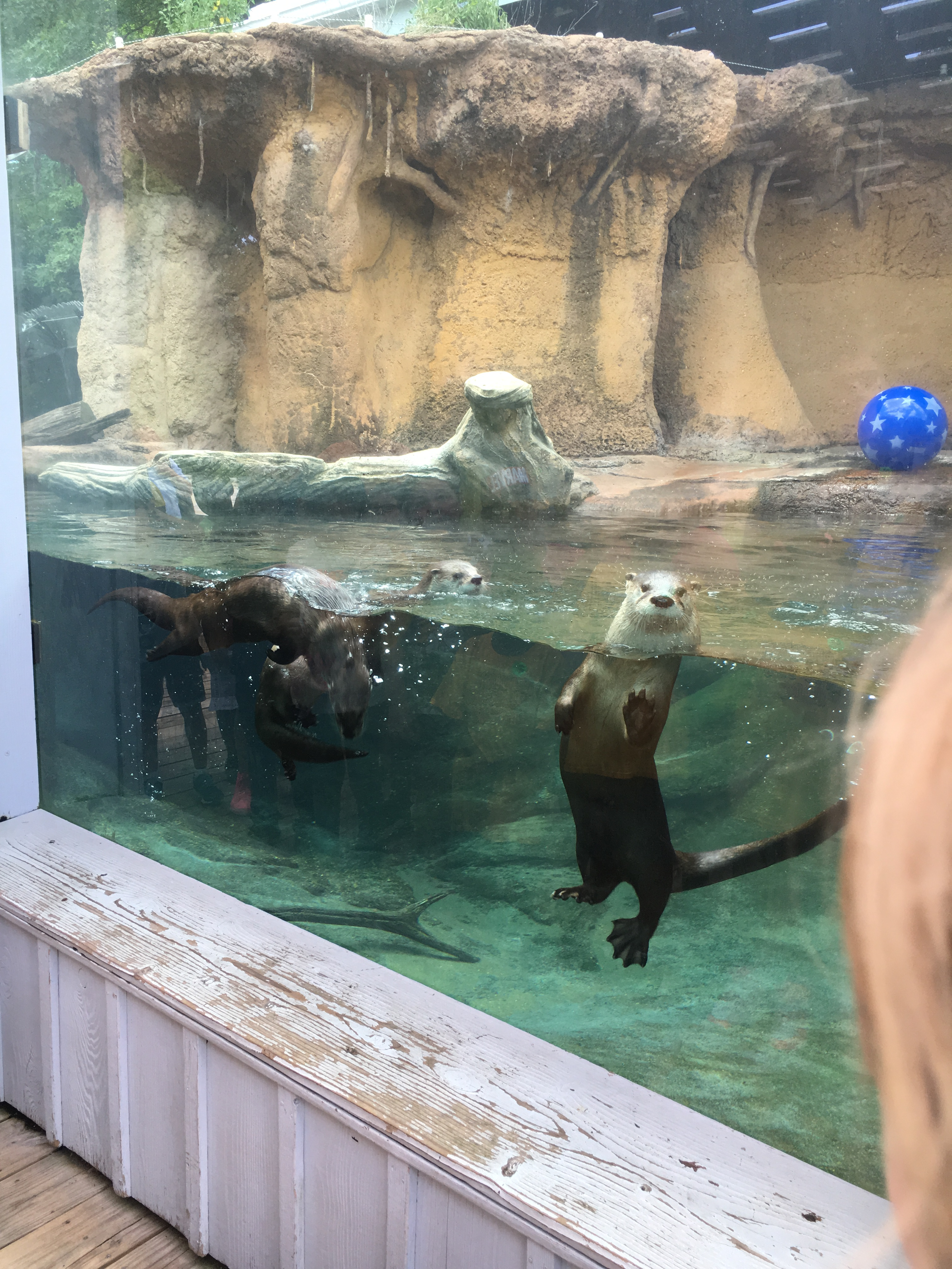 """You """"Otter"""" See These Guys"""