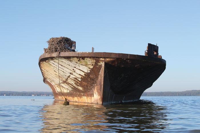Mallows Bay Ghost Fleet Declared Marine Sanctuary