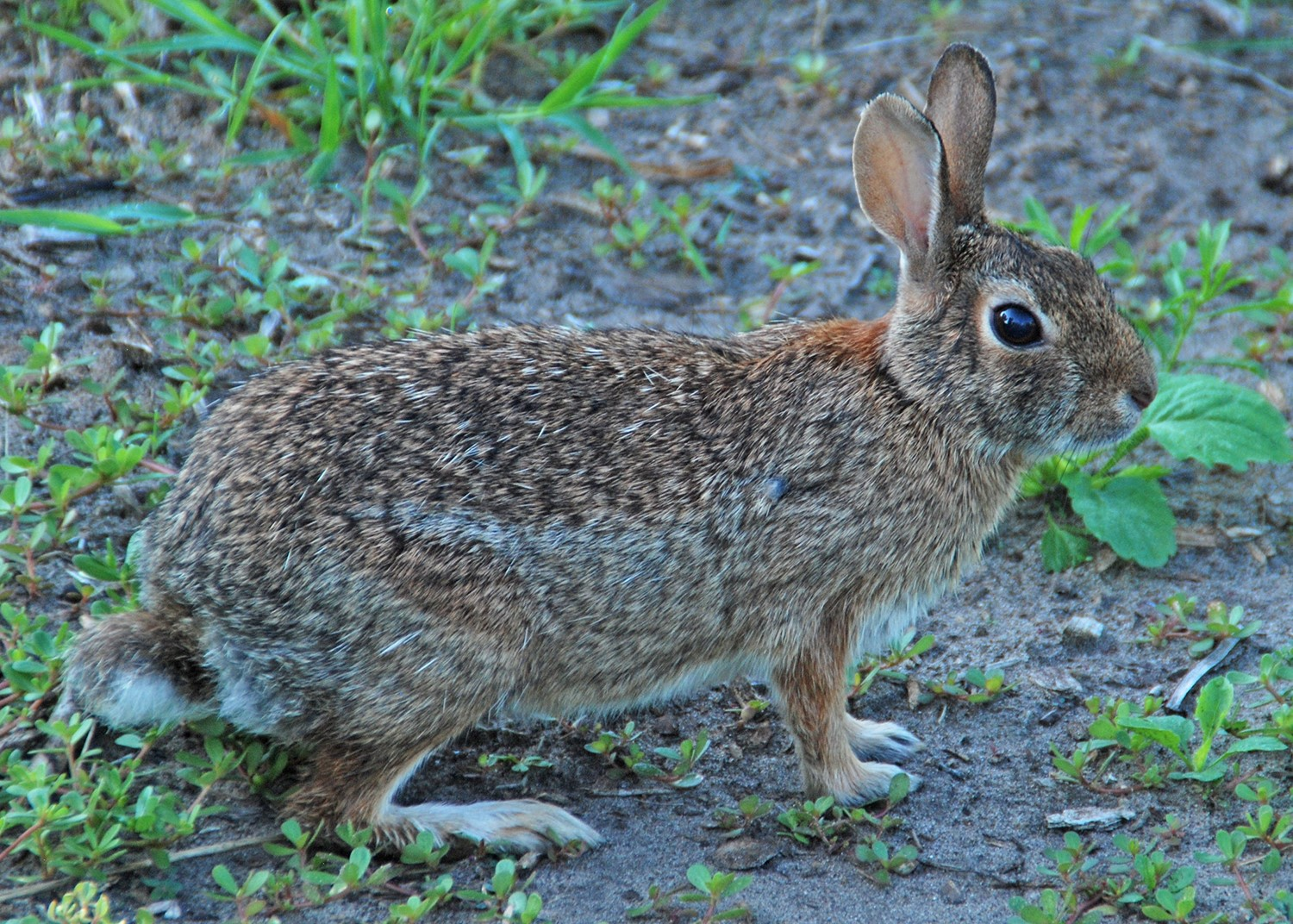 Fall Garden Tasks to Protect Your Landscape from Winter Wildlife Damage