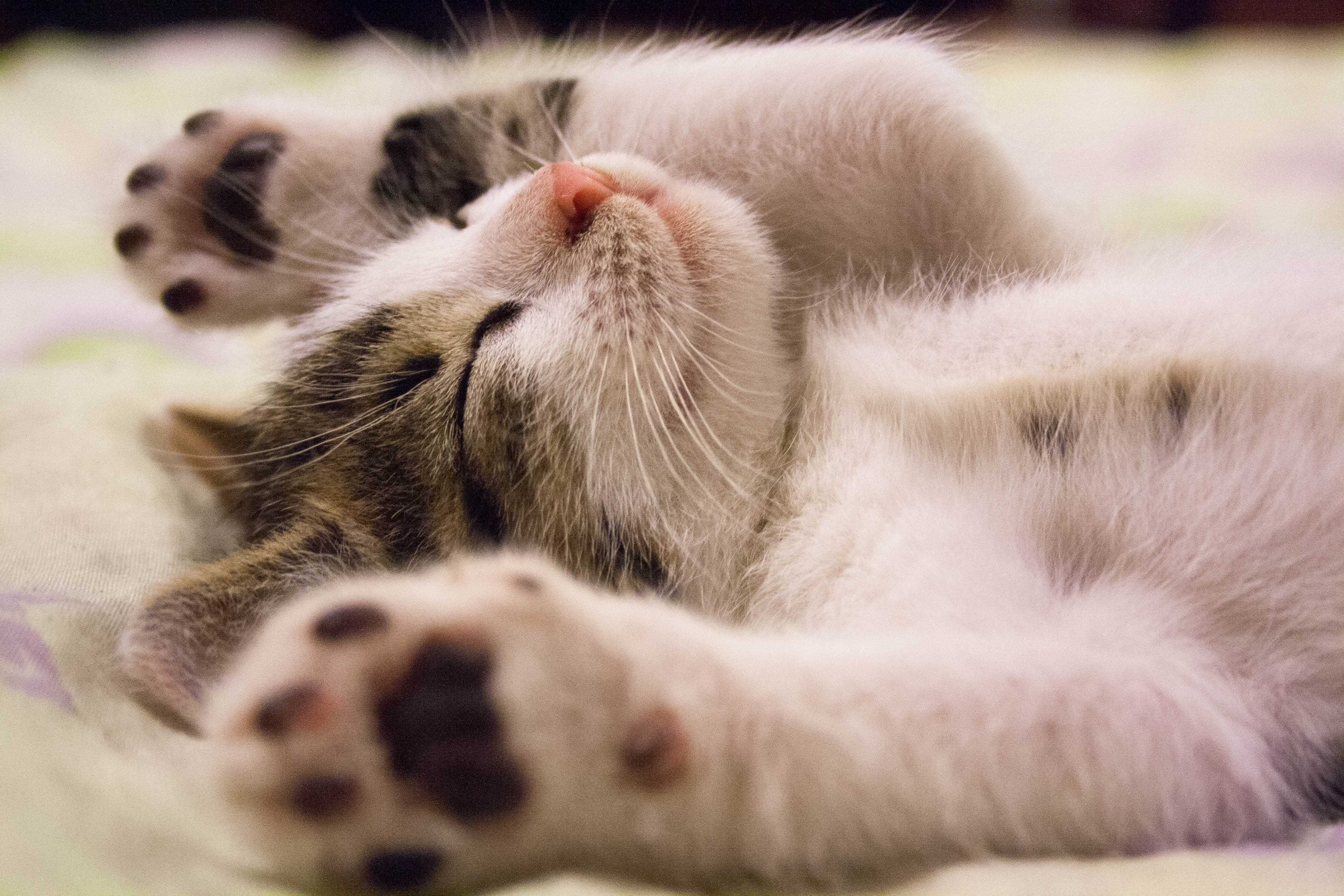 """Saying """"Yes"""": Two Stories in Honor of Adopt-a-Cat Month"""