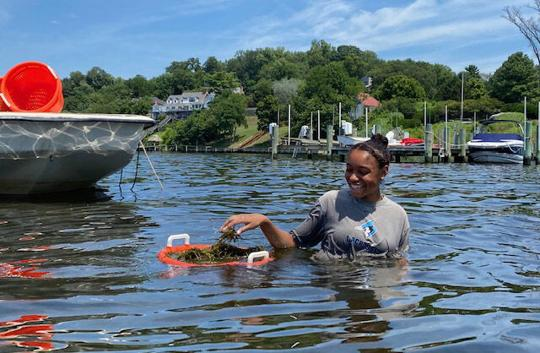 Shifts in Underwater Grasses Impact Humans as well as Wildlife