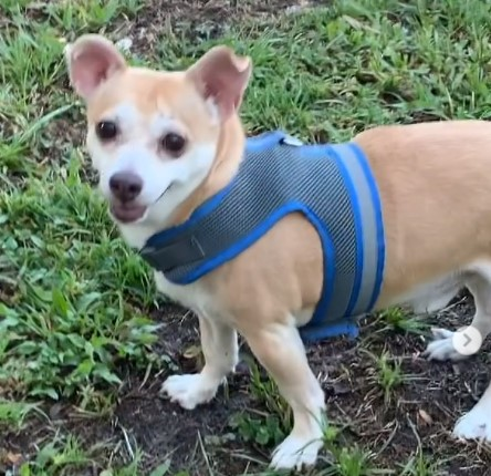 Pets of the Month August 2021