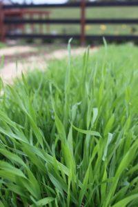 weeding