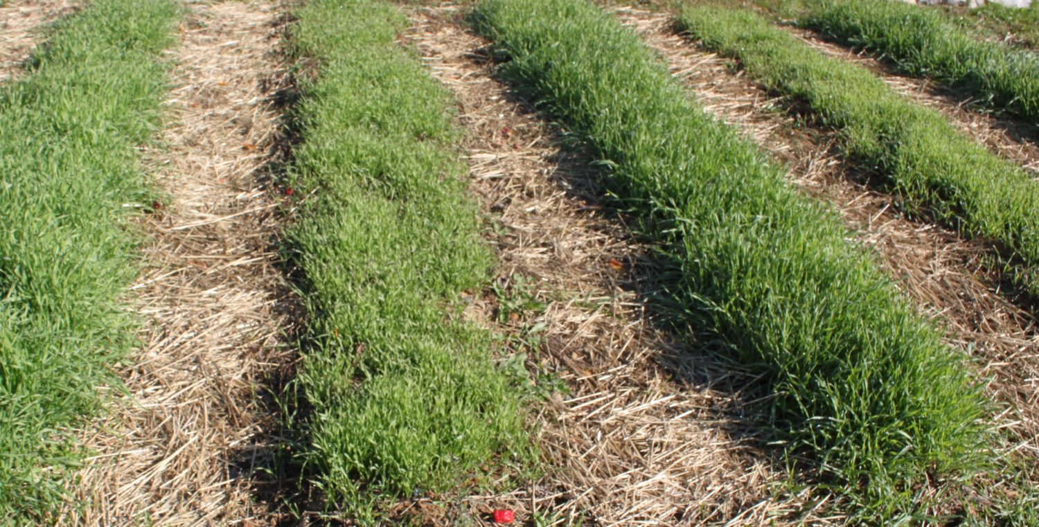 Best way to plant grass seed - Eliminate Weeds