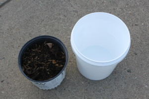 All you need to make your own compost tea is a couple of shove fulls of compost, A 5 gallon bucket and water