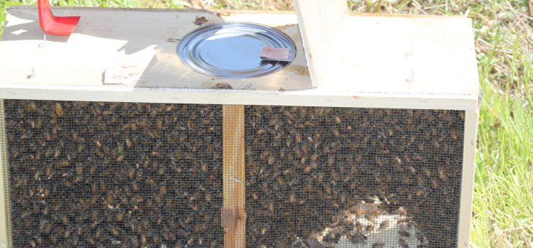 The Bees Arrive –  The Farm Gets Two New Hives And A Feisty Queen!