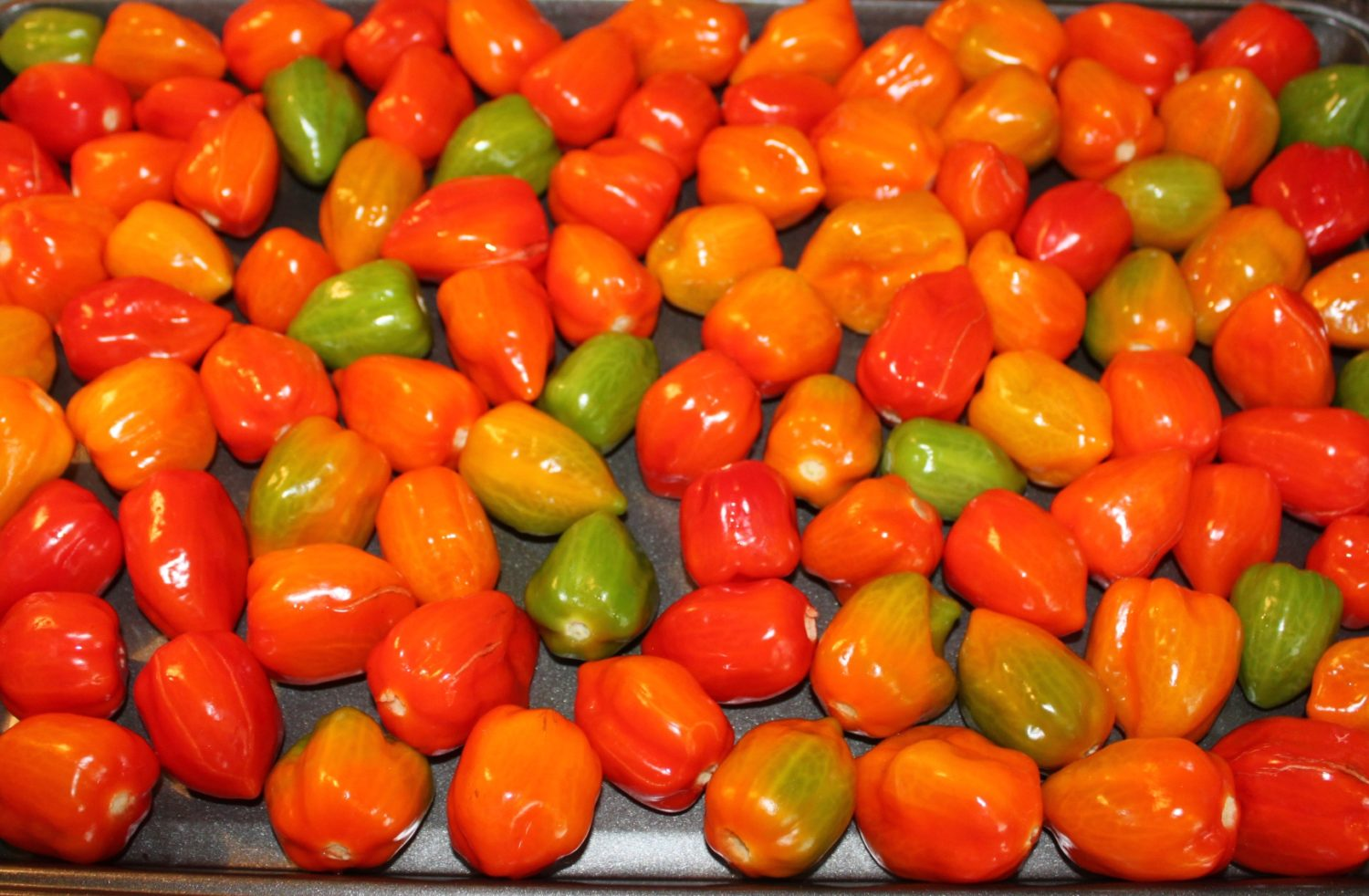 Hot Peppers Growing Eating And Uses For The Hot Veggie