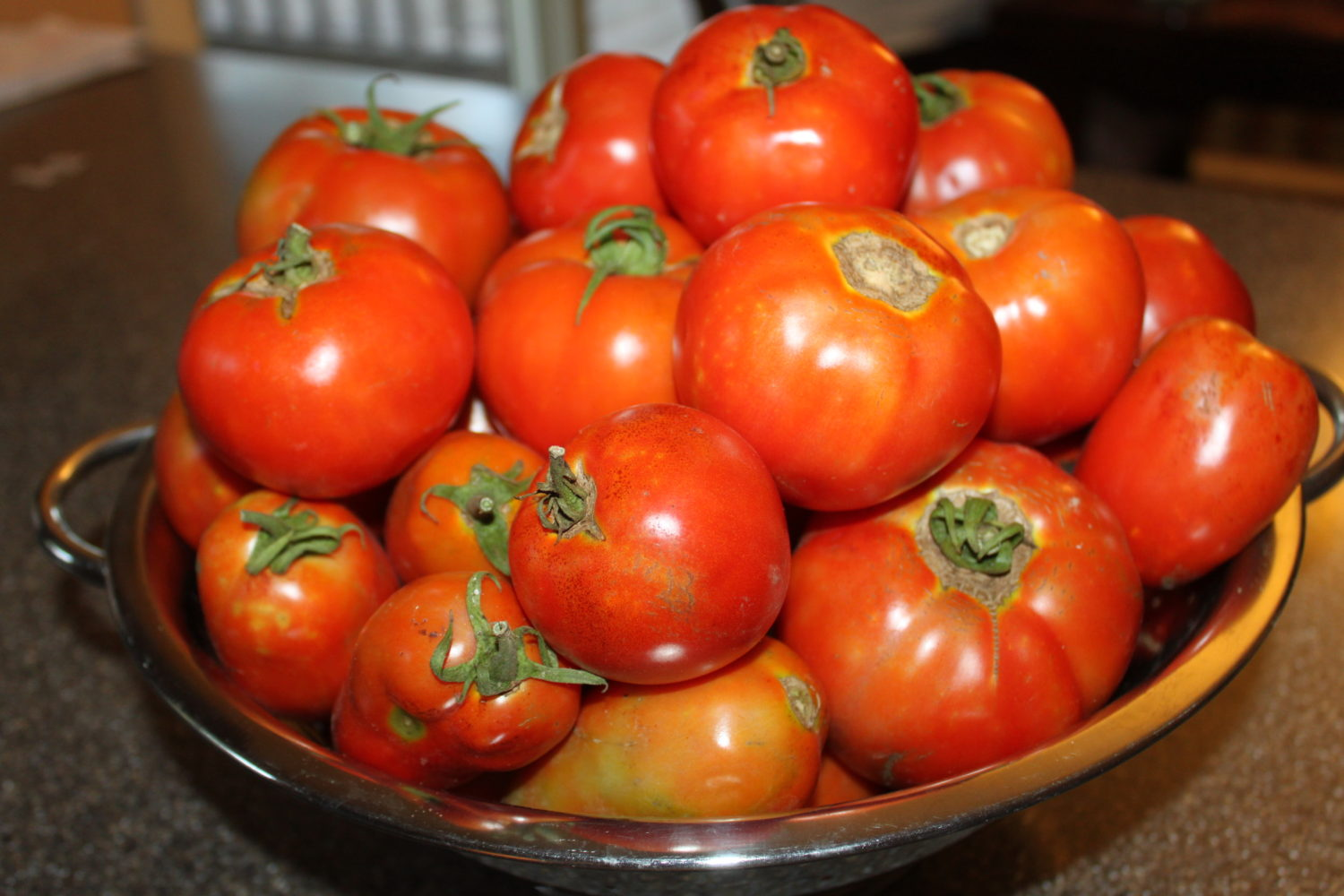 Tomato Season At The Farm What To Do With All Of Those Tomatoes Old World Garden Farms
