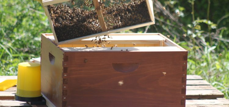Building Beehives, Collecting Rain Water – And Why You Should Always Listen To Your Wife!