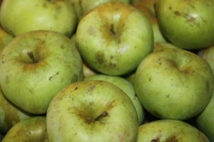 Using seconds of the apple crop is an economical way to make your own applesauce
