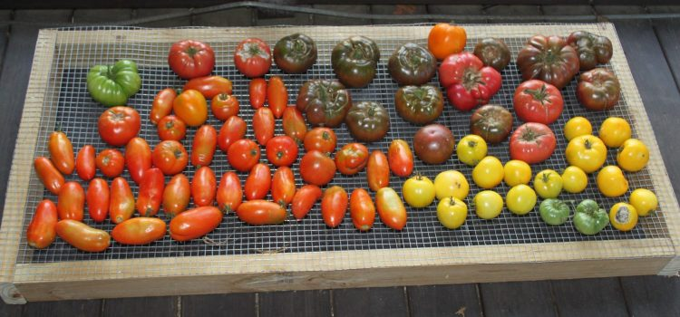 Tomatoes! The Best Tomato Varieties To Grow For Eating, Cooking and Canning