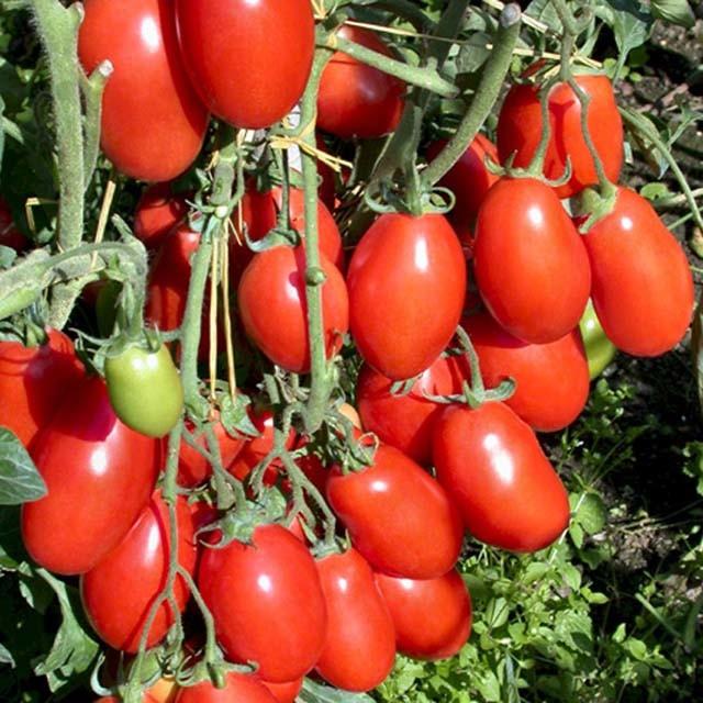 how to turn tomato paste into marinara sauce